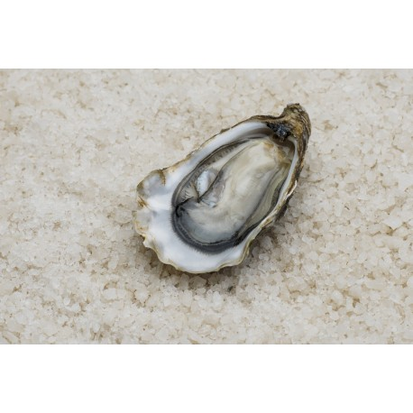 Oysters Fines de Claires N°2