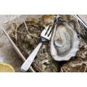 Oysters Spéciales de Claires Marennes Oléron N°2