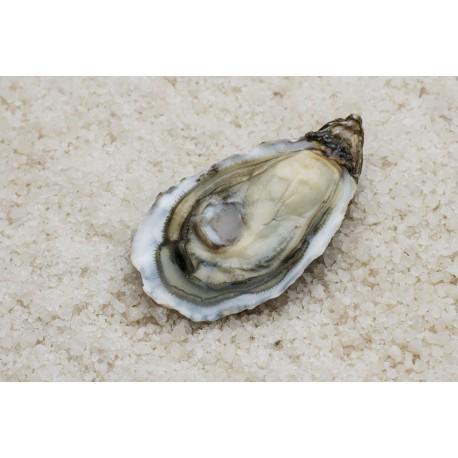 """Oysters Spéciales de Claires """"La Pousse en Claire"""" Label Rouge N°2"""